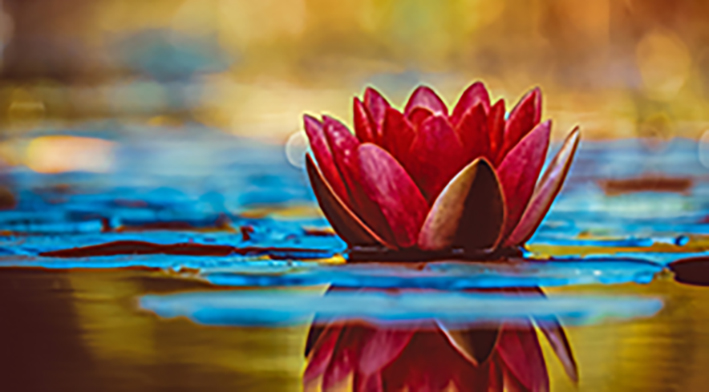 Water lily 3784022 1920 2 3